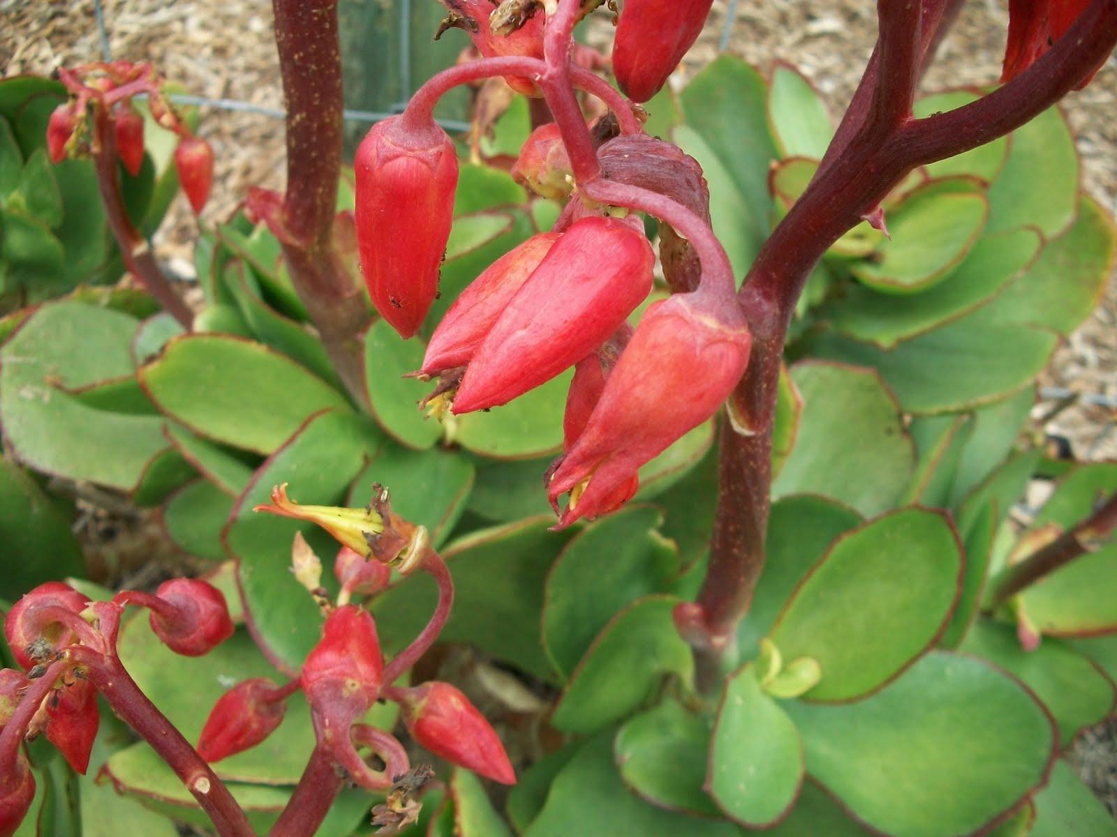 Al 39 s plants for sale flowering succulents for Plants for sale