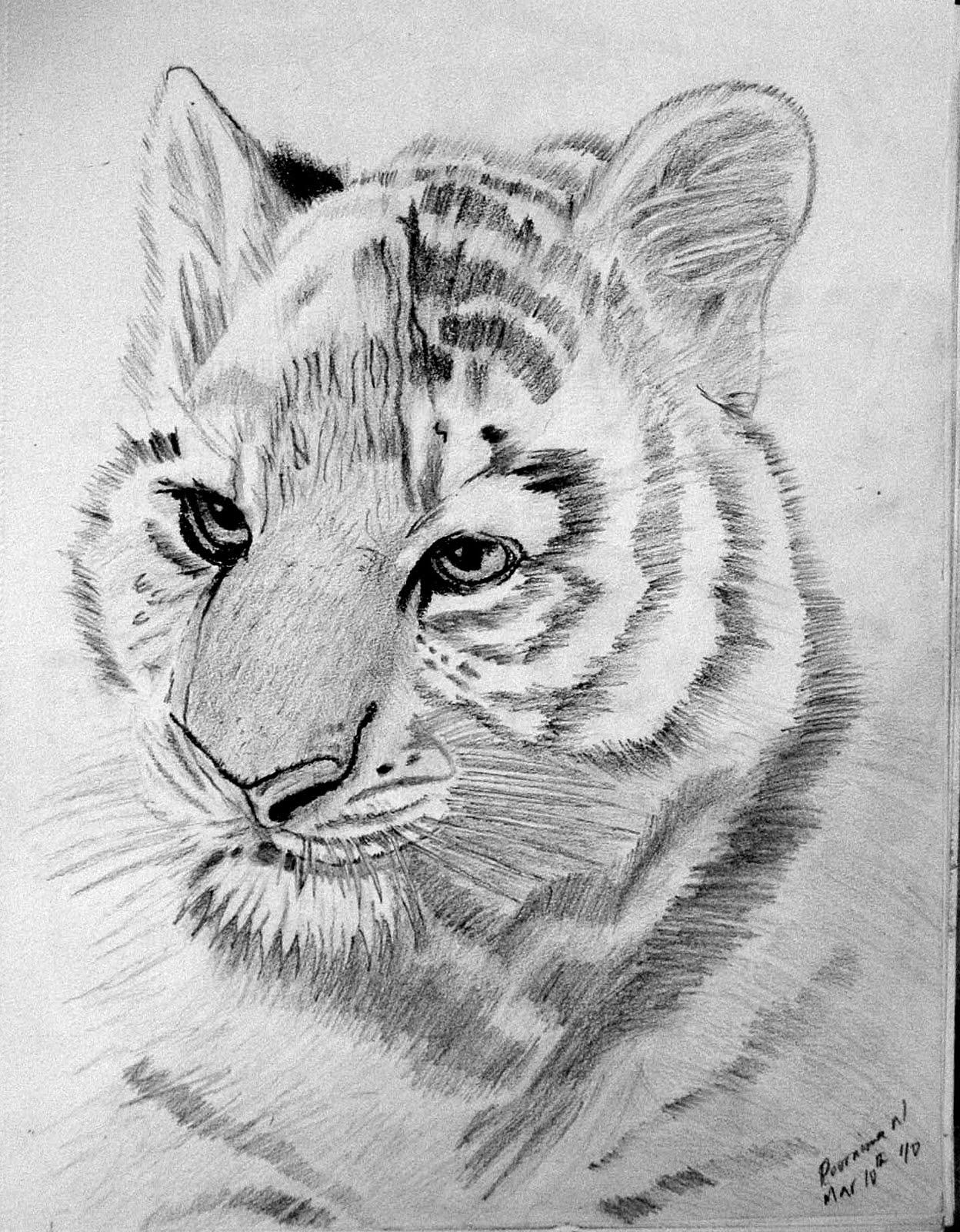 картинки карандашом тигренок