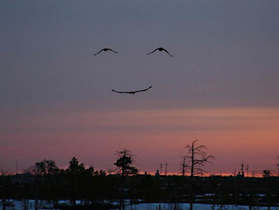 God smiles birds