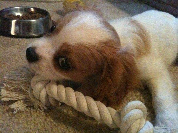 [puppy2]