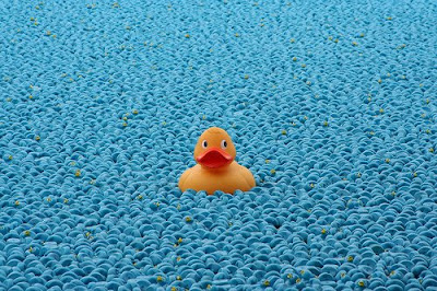 great british duck race