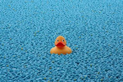 great british duck race