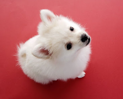 cute dog animal