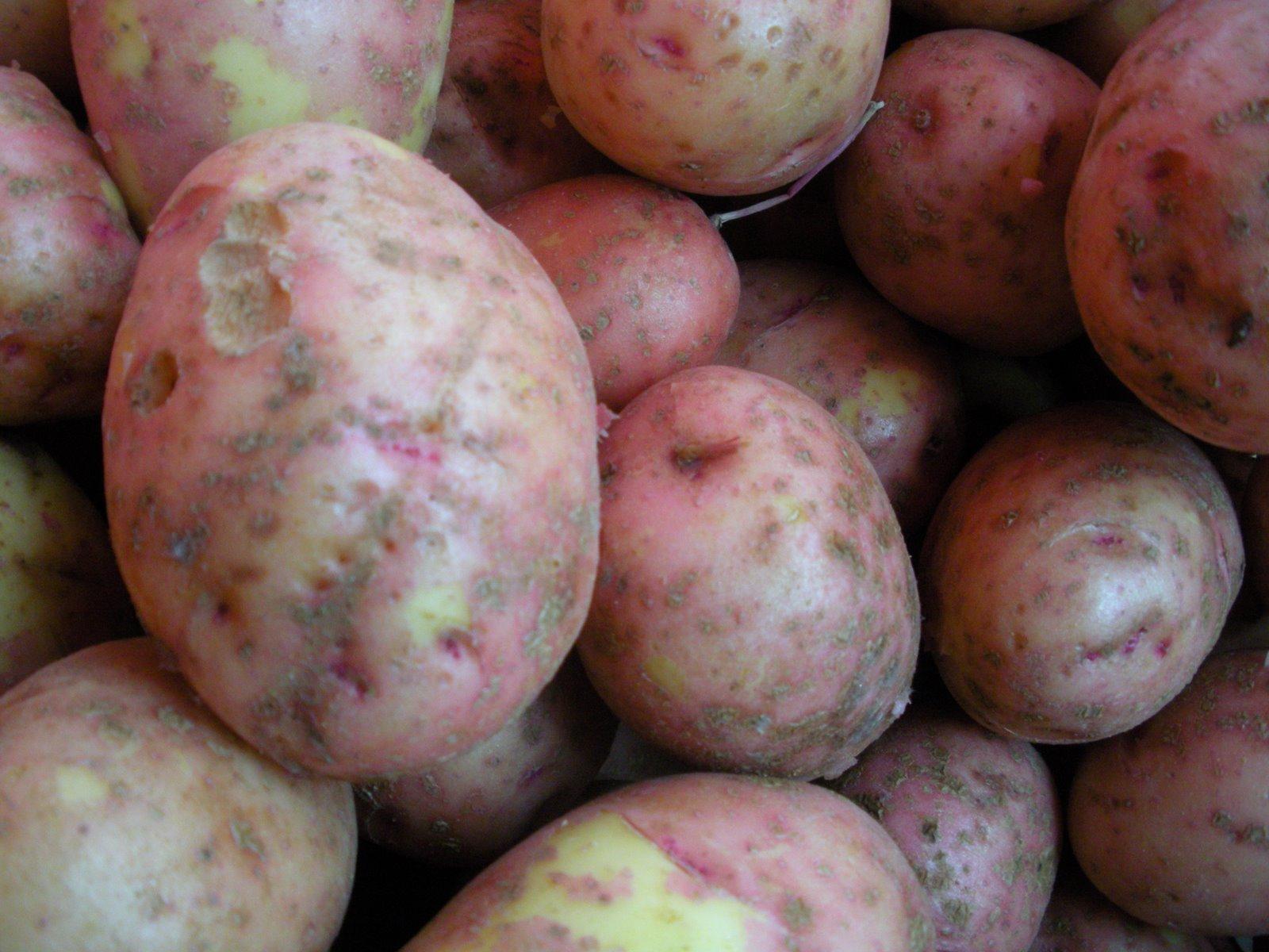 [potatoes+2.JPG]