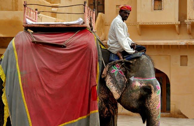 elefantes · india [haz click sobre la imagen para ver el album completo]