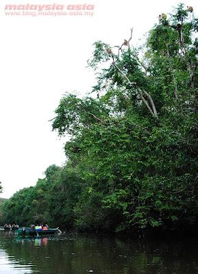 Tours of Kinabatangan River