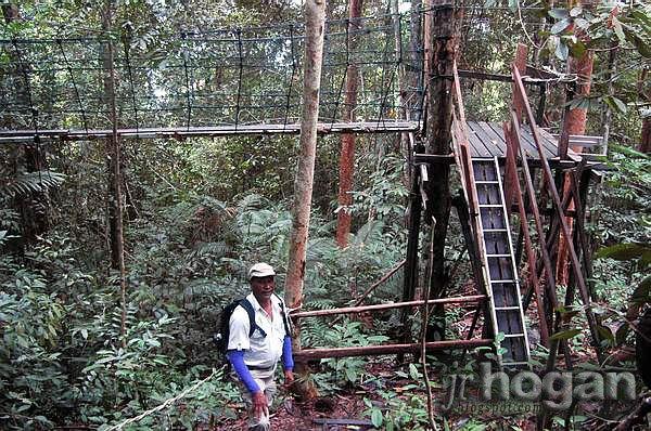 Canopy Walk in Batang