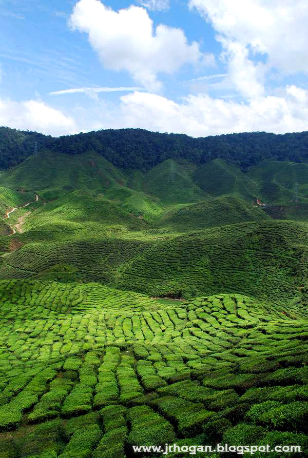 Bharat Tea Plantation at Cameron Highlands