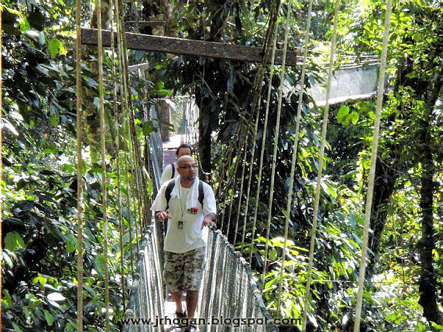 Canopy Walk in Sarawak Borneo