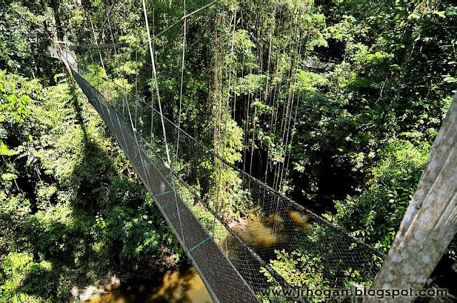 Canopy walk in Mulu National Park