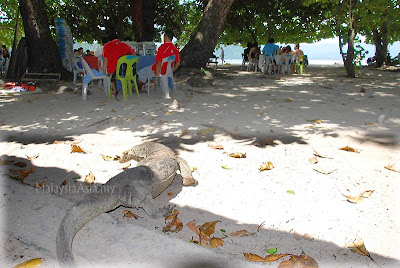 Sapi Island monitor lizards
