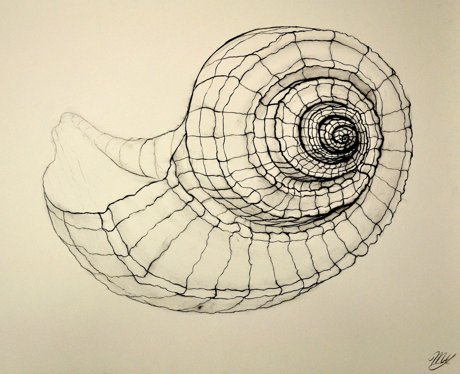 Continuous Line Drawing Famous Artists : Art shells on pinterest sea and spirals