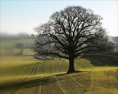nature photography, trees, tree, trees photography, beauty photography, clouds photography, clouds, wonderful photography, unique photography,