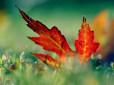 closeup photography, leaf photography, leaf, nature photography, beauty photography, cool photography,