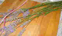 Make a Lavender Wand 1
