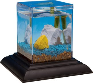 New family pet african dwarf frogs in an ecoaquarium for Eco fish tank