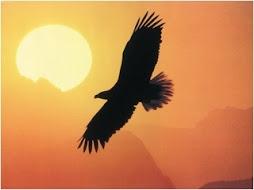 a sas tud egyedül pislogás nélkül a Napba nézni...