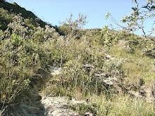 Caminho Novo - Ouro Branco - MG