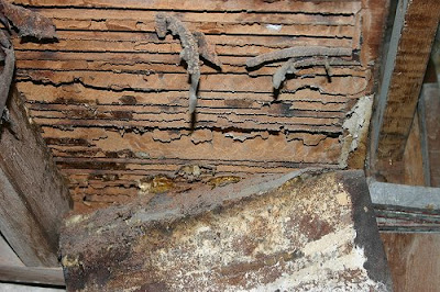 termite damage: Baclayon pipe