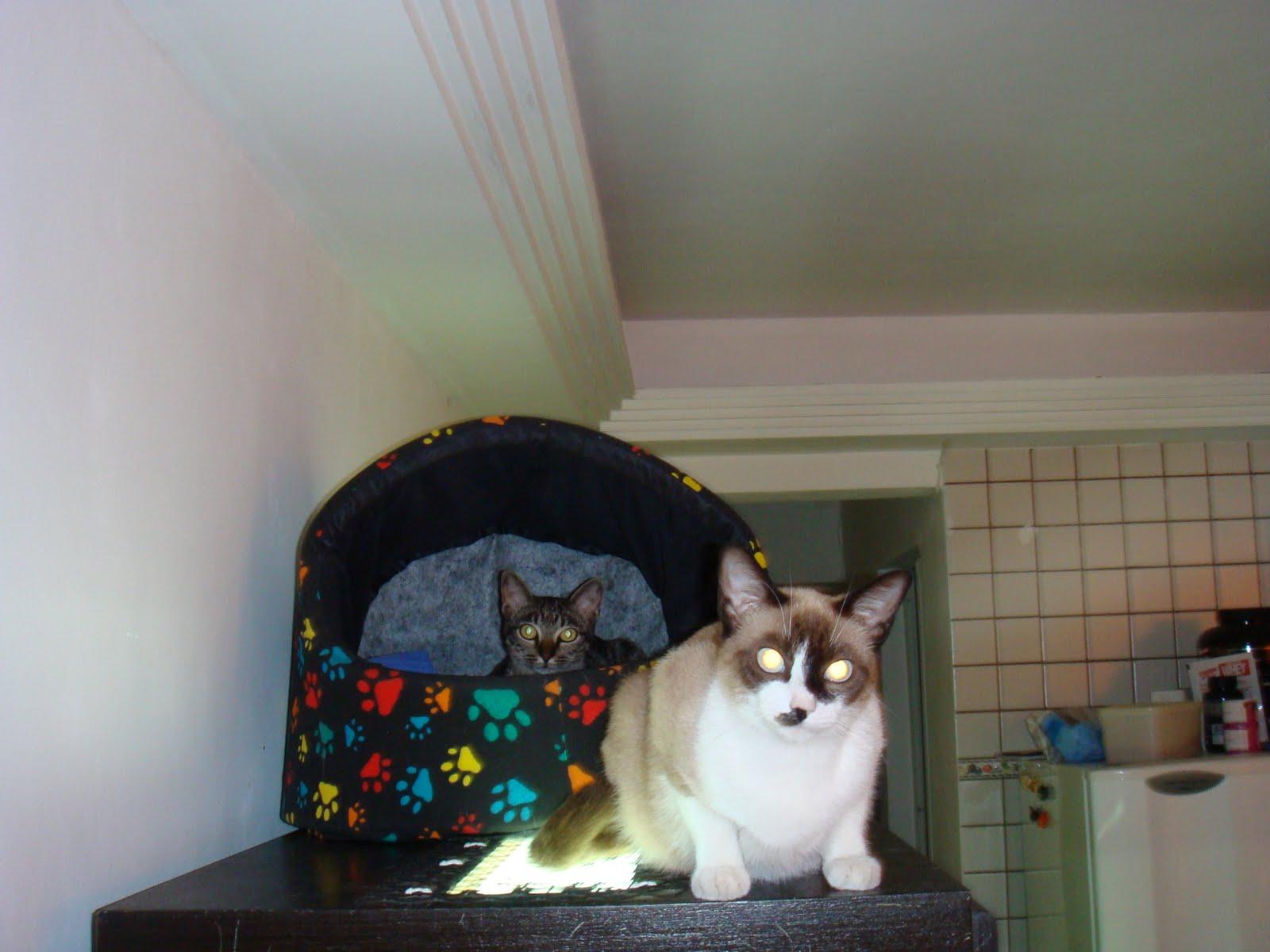 Gatos Amados da Minha Vida =^.^=: Agosto 2010 #366470 1600 1200