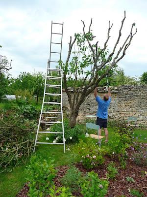 Notre jardin secret ames sensibles s 39 abstenir - Quand tailler les lilas ...