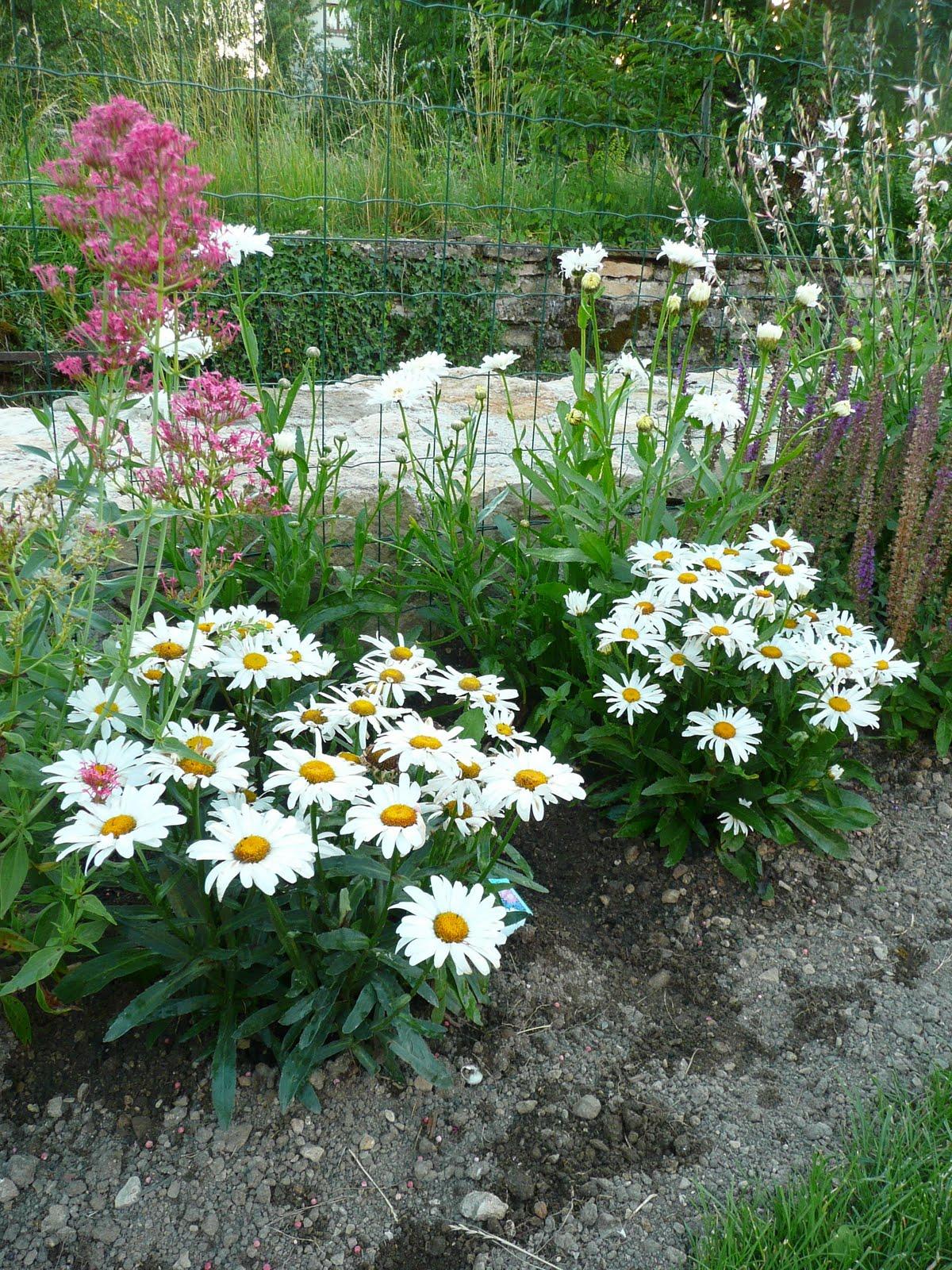 Notre jardin secret.: Plate bande des butineuses et papillons..