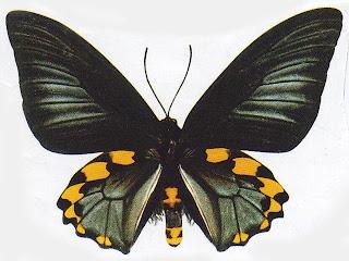Kupu-kupu_indah