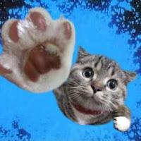 Gambar_Kucing_terbang