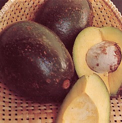 gambar_buah_apokat_masak