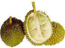 gambar_buah_durian