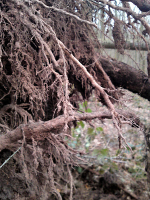 roots, storm, trees