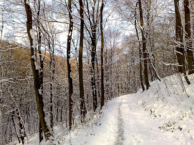 path, snow, woods