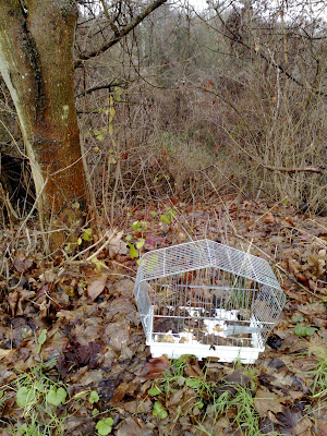 abandonment, bird cage, leaves