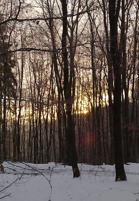 snow, sunrise, woods