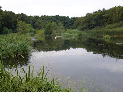 lake, maginot line, swan