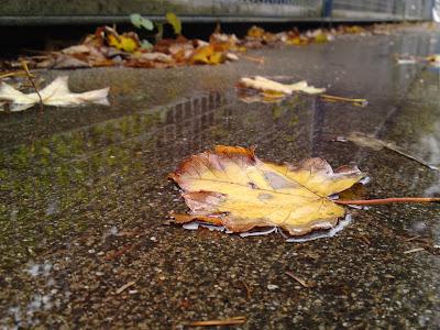 leaf, puddles,