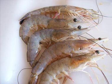 When Shrimp Were Safe to Eat
