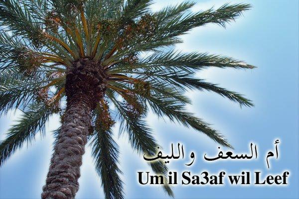 Um il Sa3af wil Leef