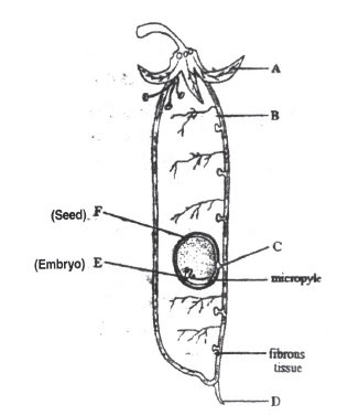science of life  reproduction in plants practice questions