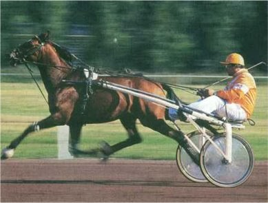 Caballos y equitaci n el troton frances como caballo de carreras - Caballo silla frances ...