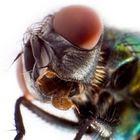 A vida através dos olhos de uma mosca