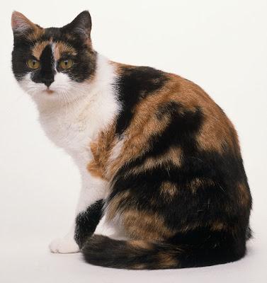 Tigerleaf: Queen