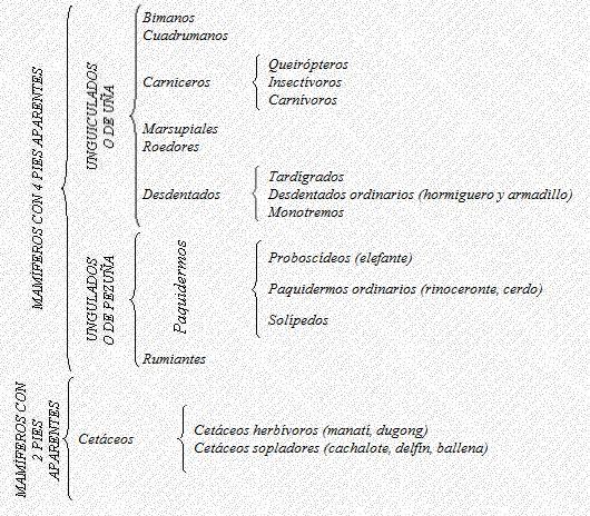 SISTEMÁTICA DE MAMÍFEROS: Sistemática de mamíferos