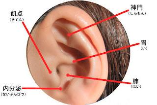 痩せる耳ツボ