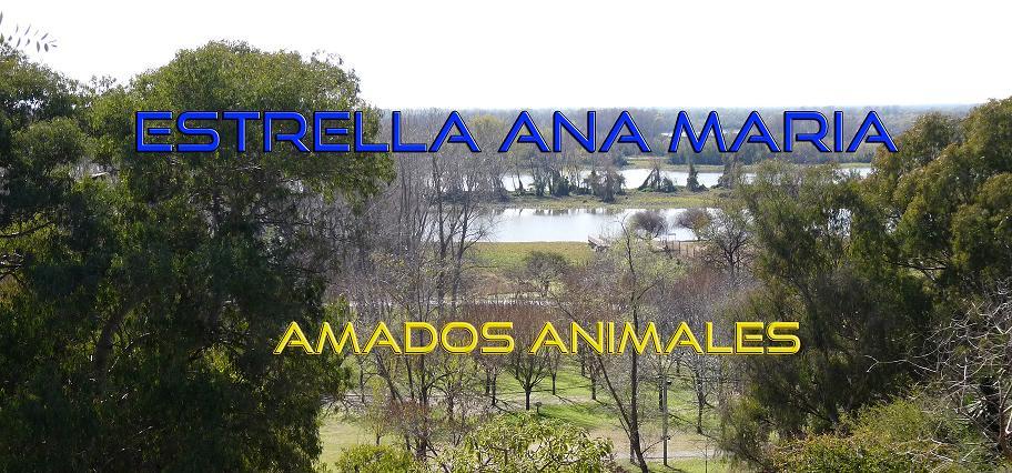 ESTRELLA ANA MARIA - AMADOS ANIMALES