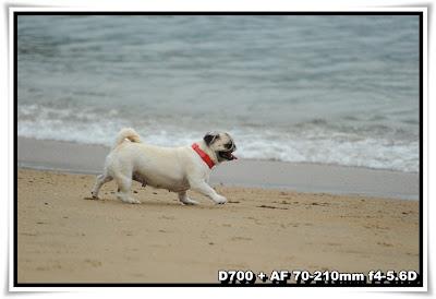 狗狗@珀麗灣