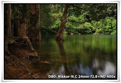 水浸白千層 城門水塘(Shing Mun Reservoir)