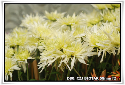 圓玄學院2009菊花展(Chrysanthemum Show 2009 at The Yuen Yuen Institute)@Carl Zeiss Jena BIOTAR 58mm f2