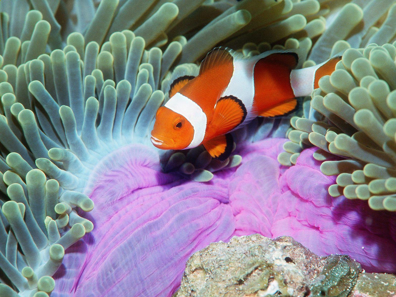 http://4.bp.blogspot.com/_sRGU_JXOz6E/TRXXnI7ZSeI/AAAAAAAAAbw/cOR51lt-ZvY/s1600/Underwater%2BWallpaper%2B%25252897%252529.jpg