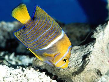#11 Fish Wallpaper